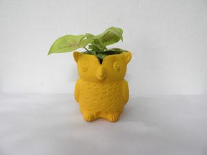 Pot Owl (S)
