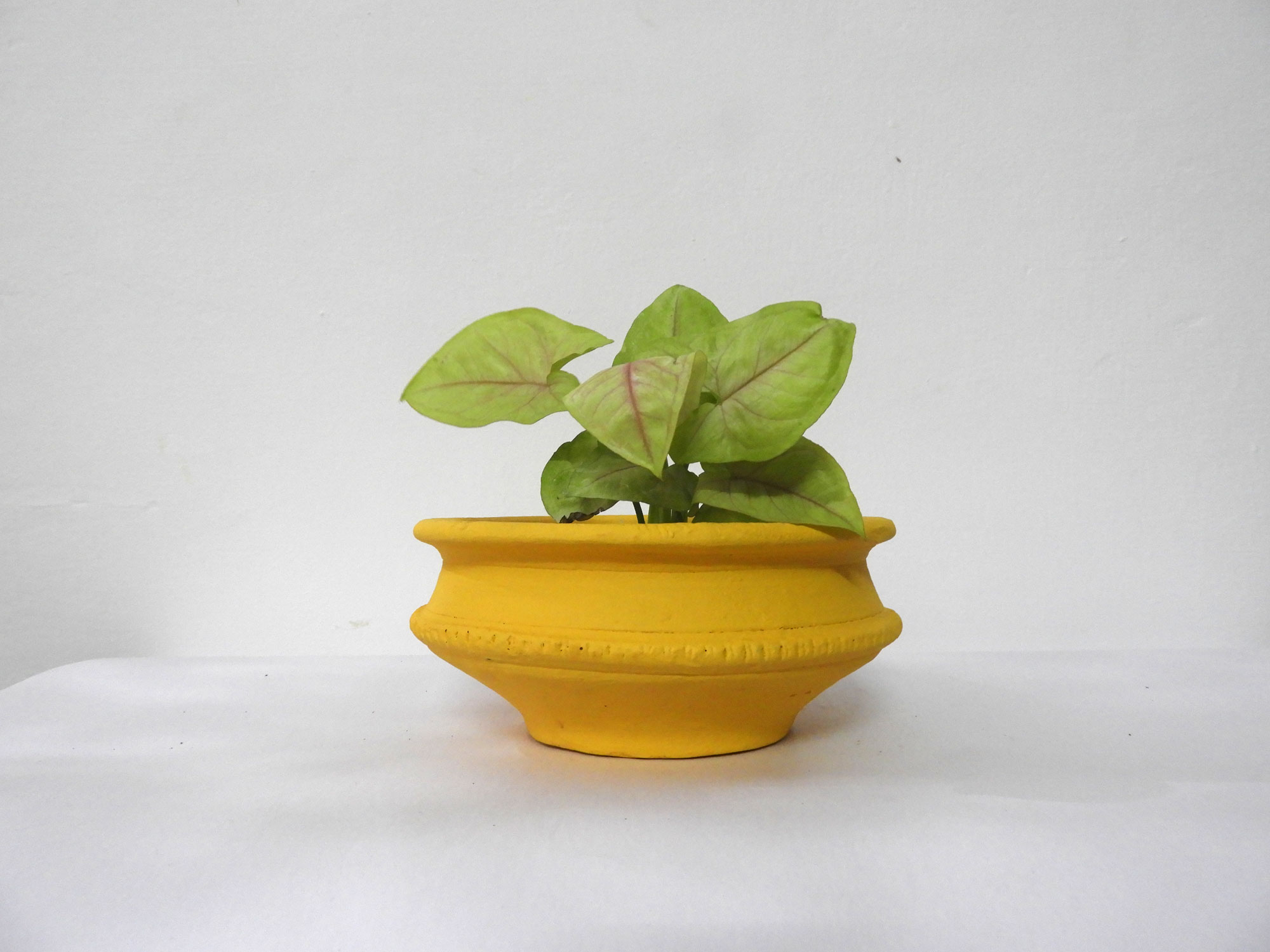 Pot Bowl (S) - flower pots for sale in whitefield