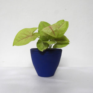 Pot Conical (XS)