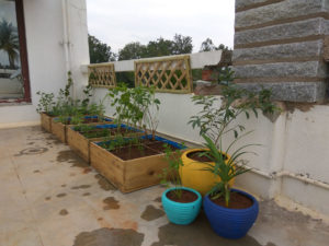 best terrace gardening