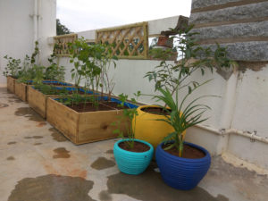 home terrace gardening in yelahanka new town