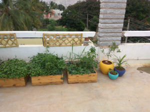 grow and glow gardens yelahanka