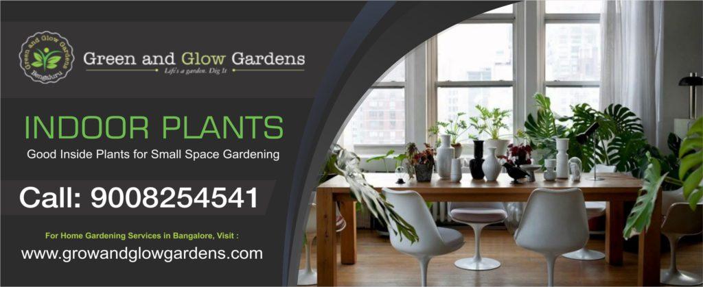 Indoor Plants in Yelahanka Grow & Glow Garden