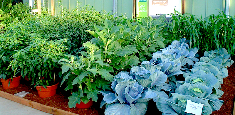 best home gardening ideas in bangalore