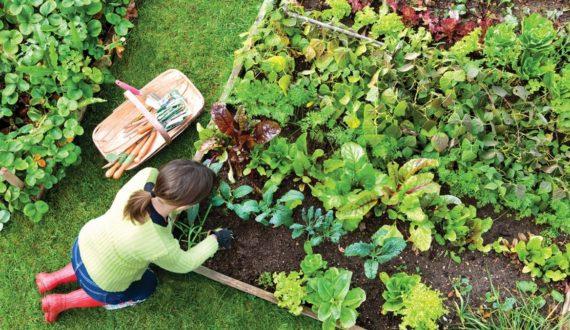 home gardening ideas in bangalore