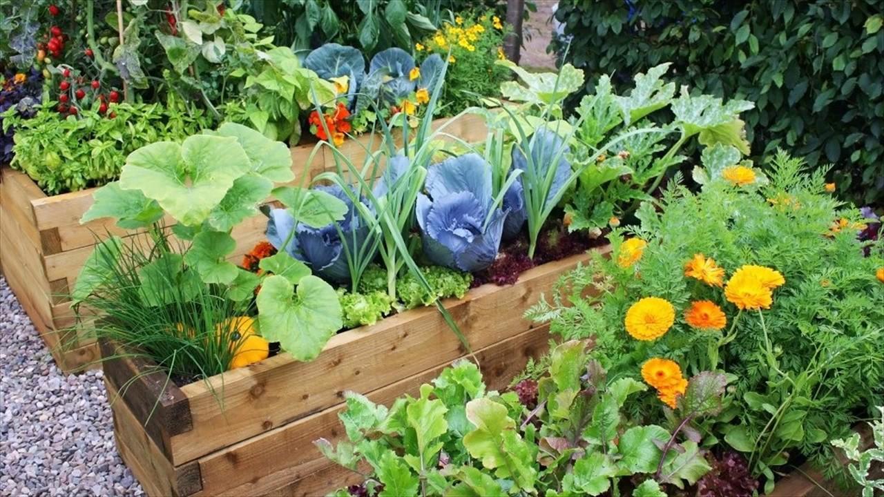 container gardening in bangalore yelahanka